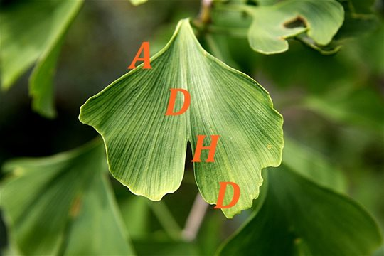ADHD a antioxidanty