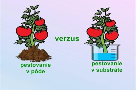 Zabúdame na chuť vypestovanej paradajky s vôňou slnka.