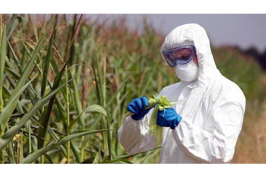 Pesticídy v potravinách